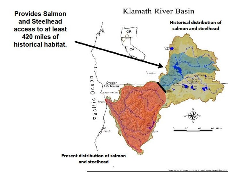 Springers: The Determined Delicacy of the Klamath River – Part II